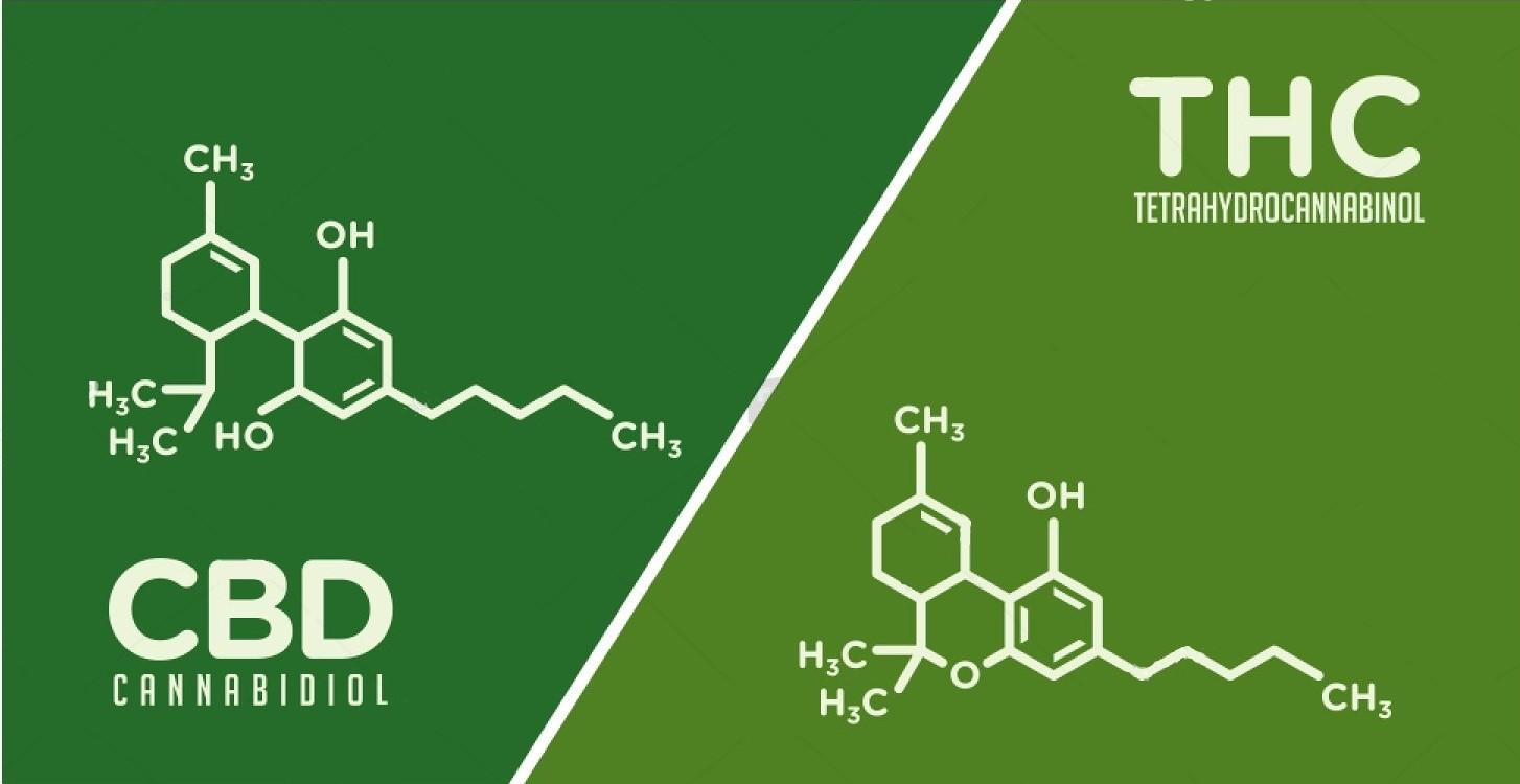 Cannabis et CBD, de quoi est-il question ? - Eurotox asbl
